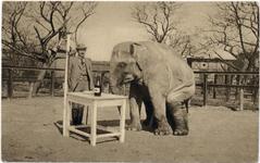 Ogród Zoologiczny. Słoń - Pocztówka