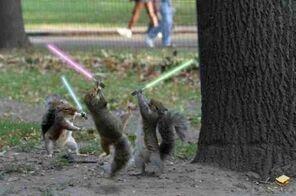SquirrelLightsaber