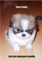 Fluffy Destroyer of Worlds.png