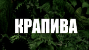 Krapiva2016TitleCard