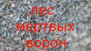 LesMyortvykhVoron2016TitleCard