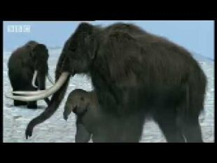 Mammoth mom and baby