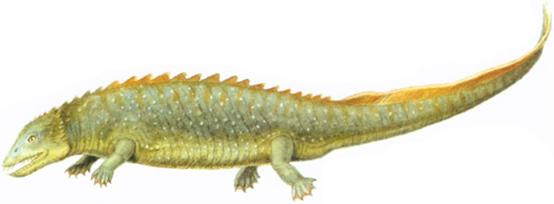 File:Paraplacodus.png