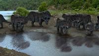 1x1 TriceratopsHerdAmbushed