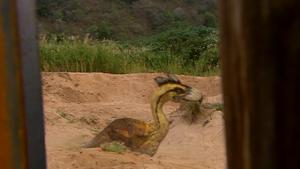 1x6 TerrorBirdTakingDustbath