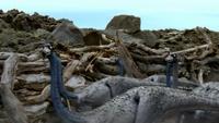 1x1 OrnithomimusEnteringPortal
