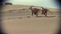 1x6 ParasaurolophusInBinoculars