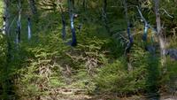 1x1 OrnithomimusInBushes