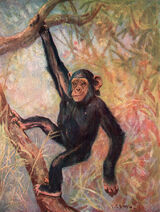 Anthropopithecus-troglodytes-mary-evans-picture-library