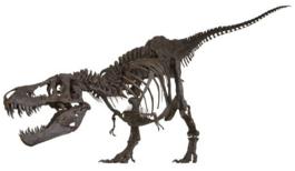 Stan skeletal