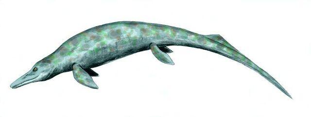 File:Cymbospondylus.jpg