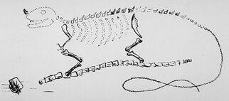 Mantell's Iguanodon restoration