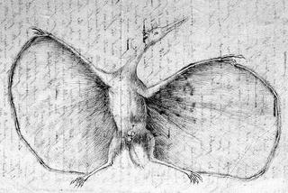 Hermann's Pterodactylus