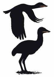 Samrukia as bird