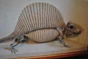 Dimetrodon milleri