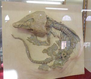 Labidosaurus RUGM