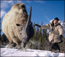 File:Prehistoric Park Elasmotherium.jpg