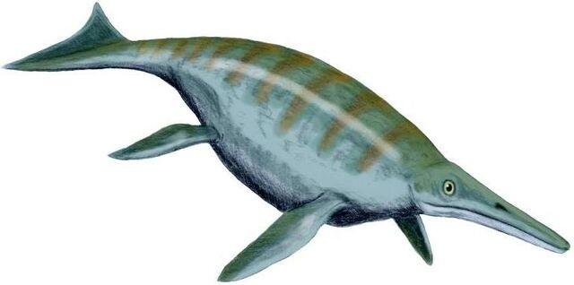 File:Shonisaurus popularis.jpg