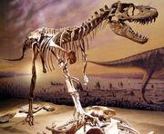 Albertosaurus tyrell