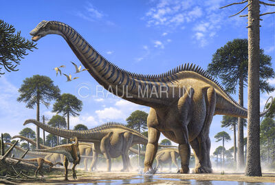 Supersaurus-1-
