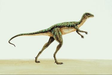 Heterodontosaurus-10505