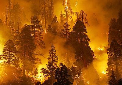 4f56273e2adb3forest-firesjpg
