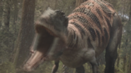 300px-Carcharodontosaurus-1