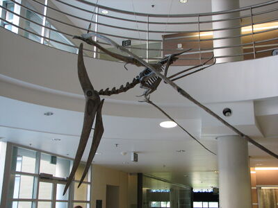 UCMP Pteranodon left-1-