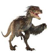 Velociraptor the speedy theif robber