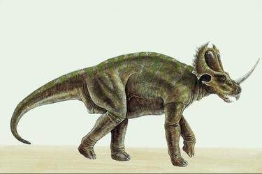 Centrosaurus-10491