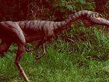 Syntarsus (Coelophysis synynom)