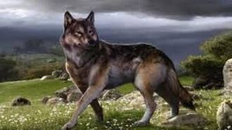 Prehistoric Predators Killer Wolf