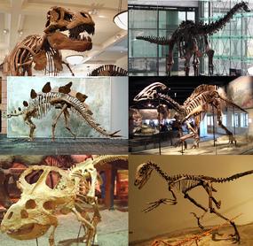 285px-Various dinosaurs-1-