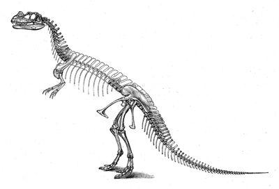 CeratosaurusSkeleton-1-