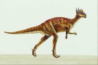 Stygimoloch-10488-1-
