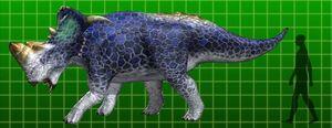 Pachyrhinosaurus-1-