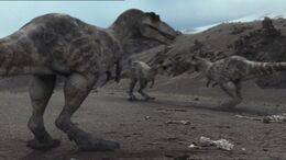 1x1 TyrannosaurusPackInTerritory
