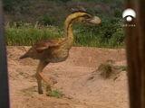 Terror Bird Paddock