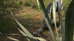 1x3 OrnithomimusCheckingOnEggs