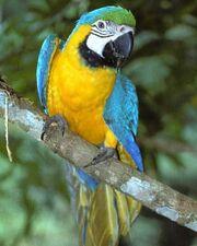 Macaw edited