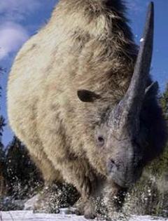 Elasmotherium New