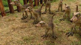 1x4 OrnithomimusChicks