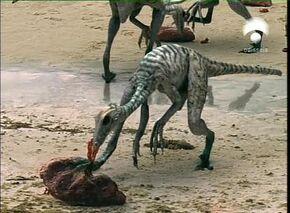 Troodon 6