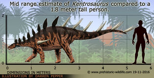 Kentrosaurus-size