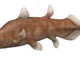 Axelrodichthys