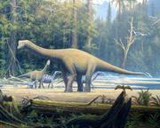 Europasaurus holgeri detail