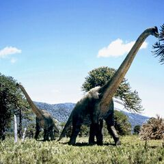 Brachiosaurus comiendo hojas.