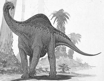 Melanorosaurusdd