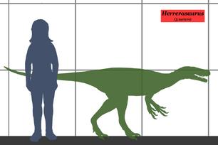 Herrerasaurus SIZE
