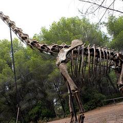 Esqueleto de Brachiosaurus.
